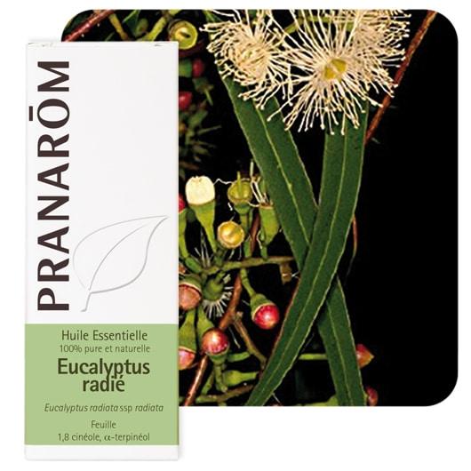 Eucalyptus Radie Pranarom